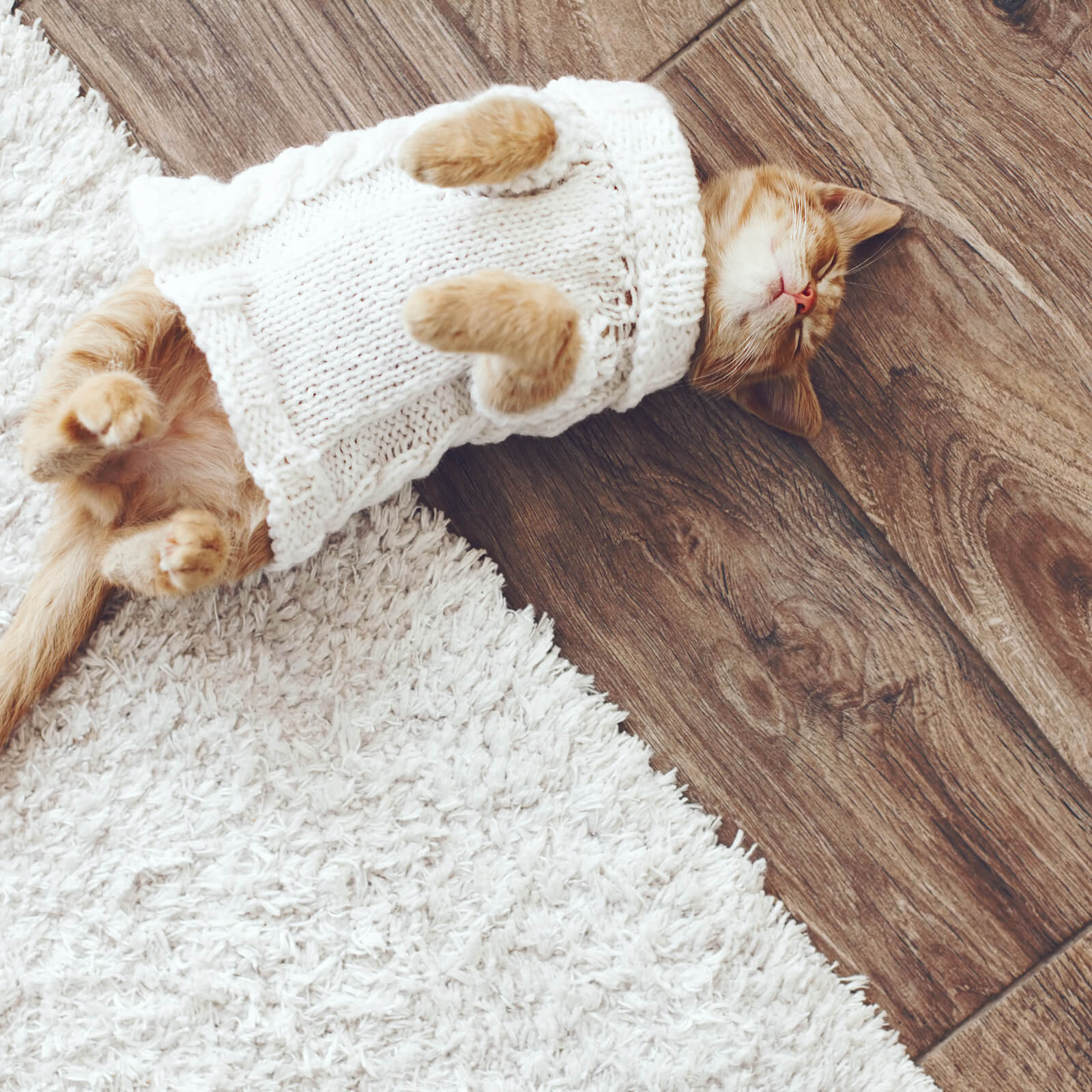 Pet friendly floor | Floors by Roberts